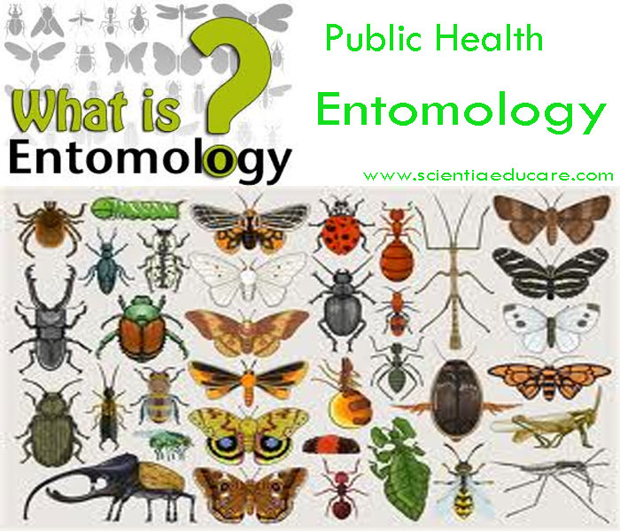 "an analysis of the career in entomology a study of insects Job postings trending topics: study shows rapid evolution in lab-reared insects insects"" journal of economic entomology."